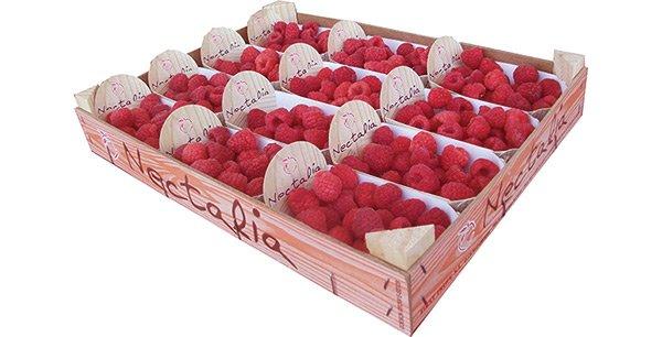 Nectalia: Producteurs de Fruits Spécialistes en Fruits à Noyaux
